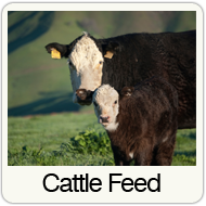 cattle-feed.png