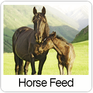 horse-feed-over.png